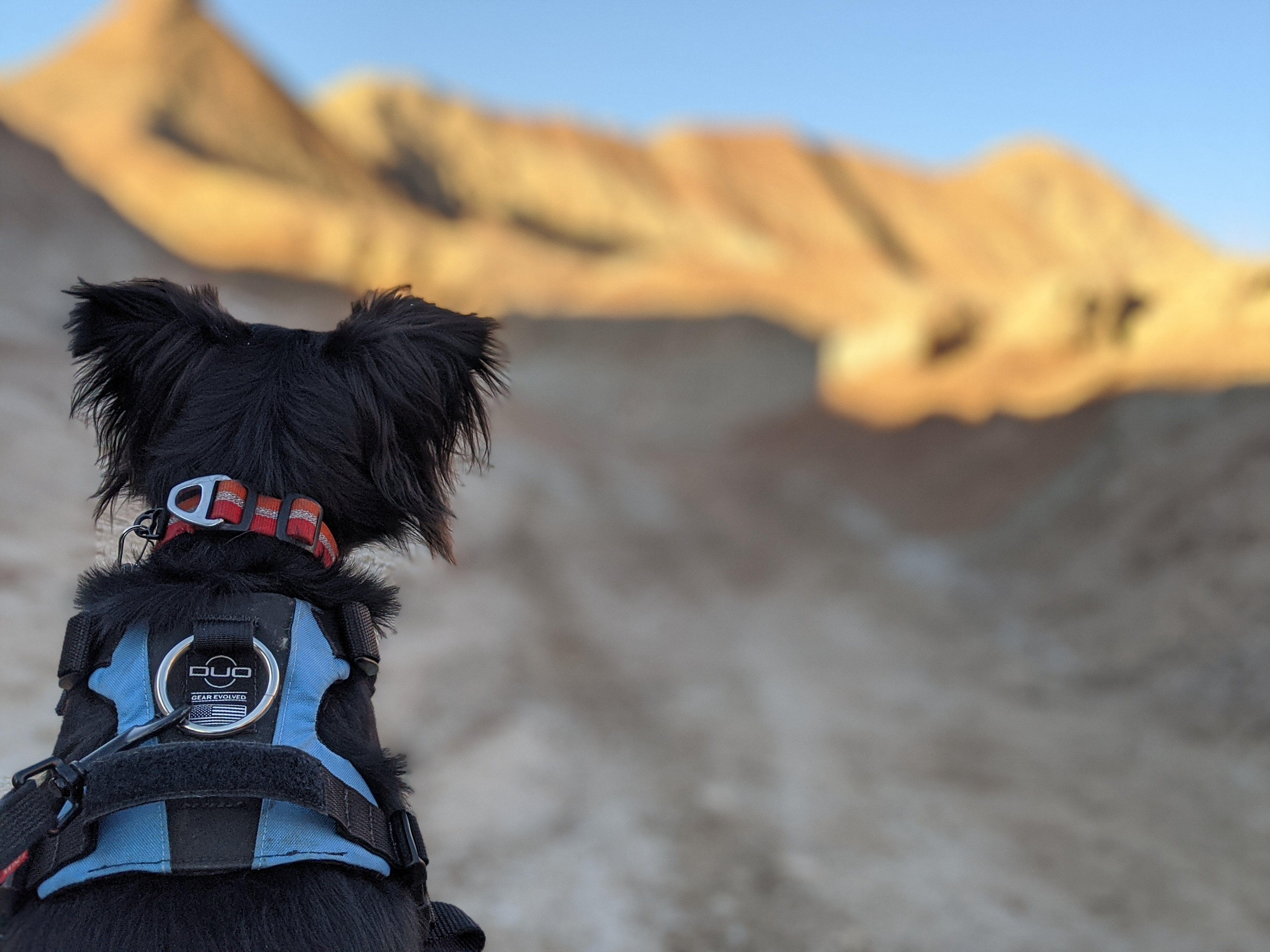 Duo Hoplite MPC Eclipse Review dog harness